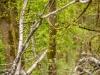 Banzer Wald - (c) M. Kern